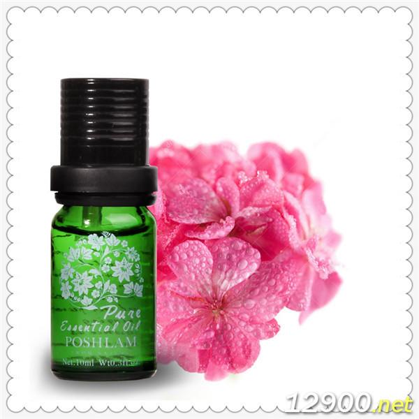 天竺葵-Pelargoniumasperum